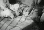 Thumbnail Algiers (1938)